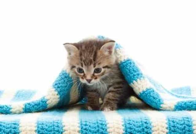funny kitten and blue bedspread