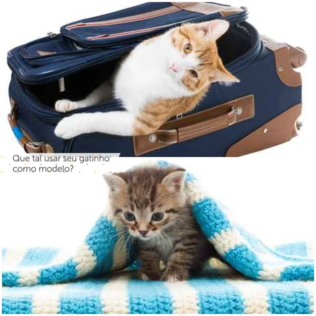 nat-post-felinos