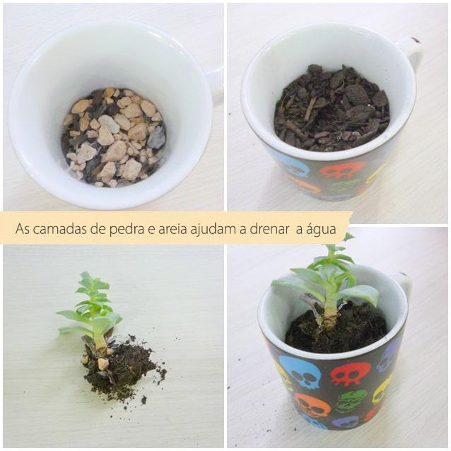 como plantar suculenta em xícara