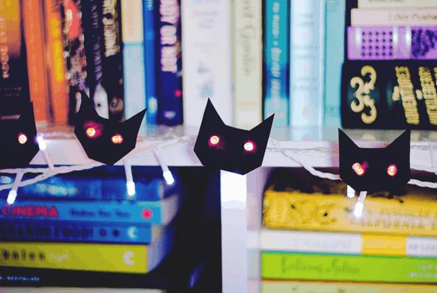 gato luzes