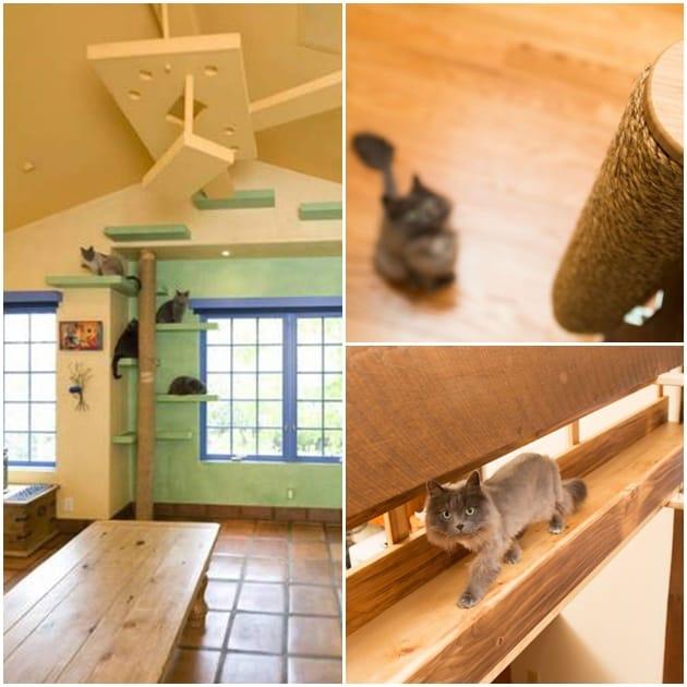 casa-adaptada-para-gatos-post