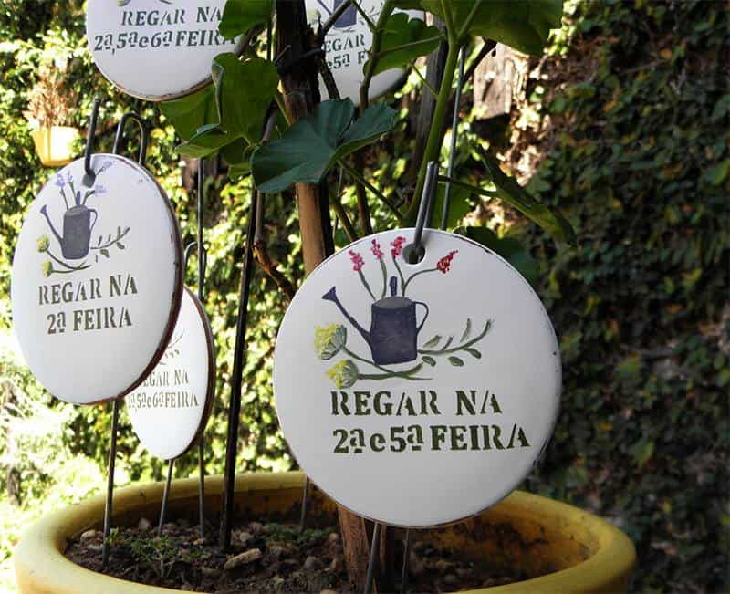 como plantar suculentas placas