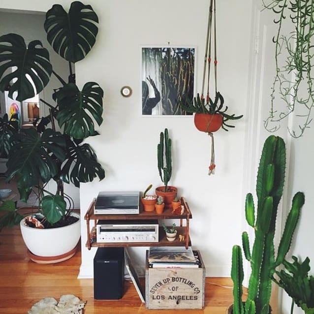 Plantas em alta na decoração
