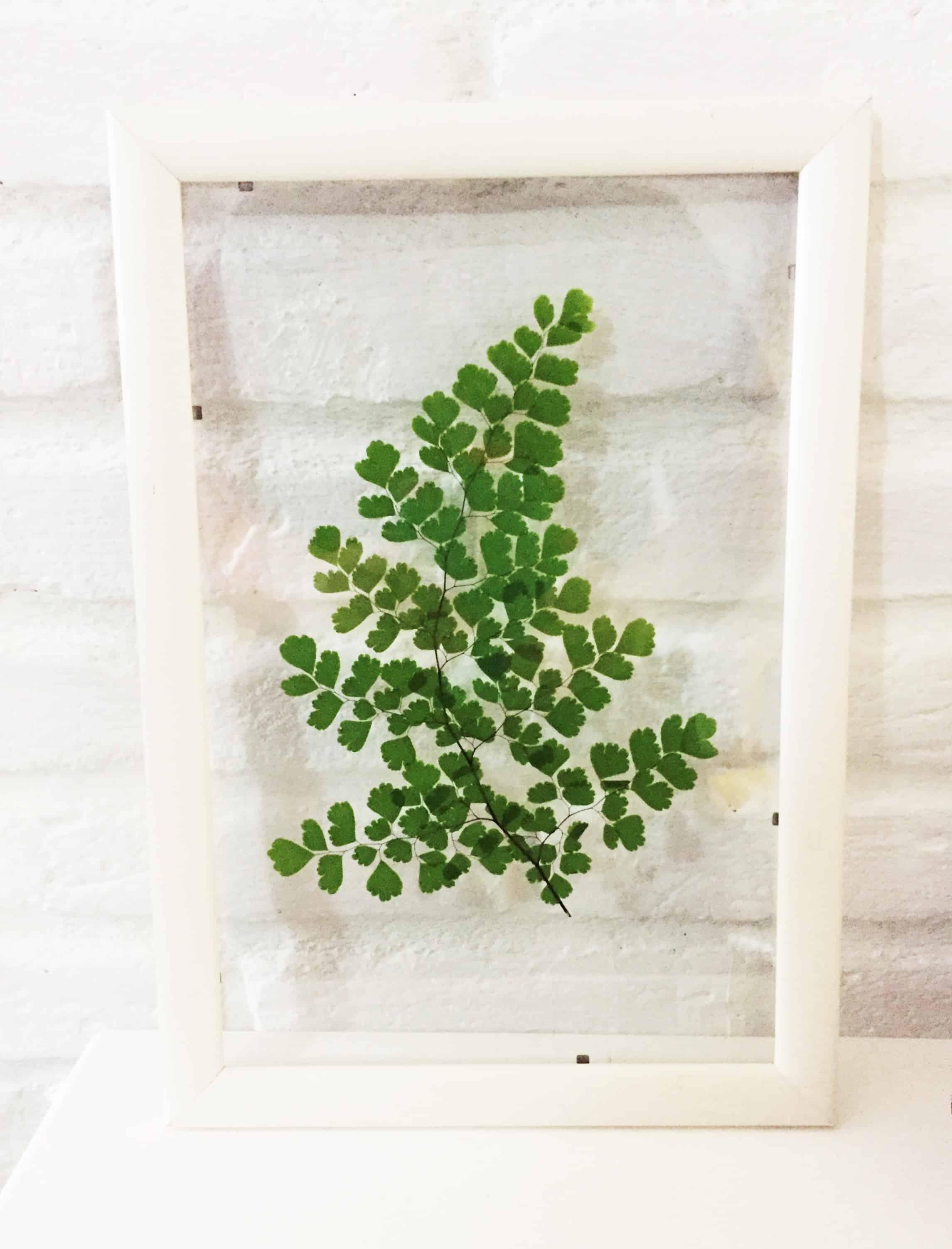 quadro de folha natural